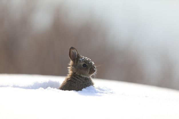 雪の中で面白いふわふわバニー