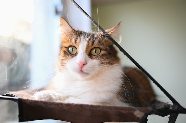 Funny fluffy cat with green eyes on a cat's hammock