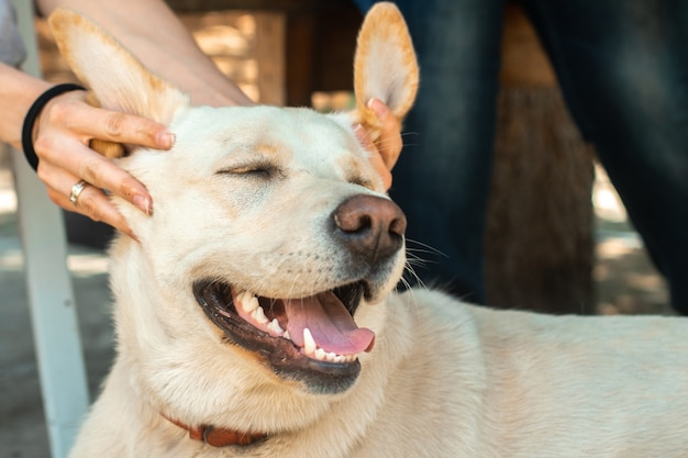 Funny furry dog labrador on the street