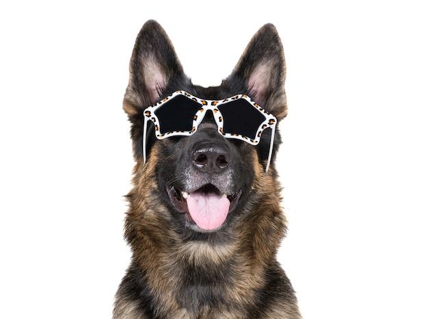 Funny german shepherd wearing glamorous sunglasses
