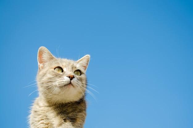 푸른 하늘에 재미있는 회색 고양이. 애완 동물 초상화 줄무늬 고양이 동물 복사 공간
