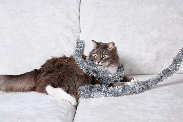재미 있은 회색 고양이 크리스마스 장난감 크리스마스 시즌과 새해를 가지고 노는