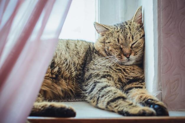 Забавный серый полосатый кот спит на подоконнике окна и смотрит одним глазком