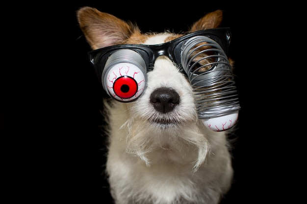 Funny halloween dog wearing a zombie bloodshot eyes glasses.