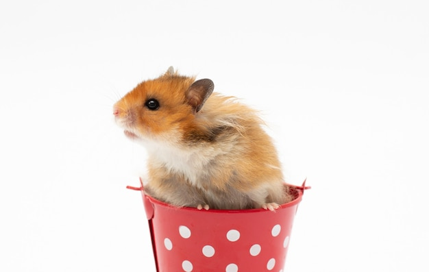 Funny hamster in the basket on white surface