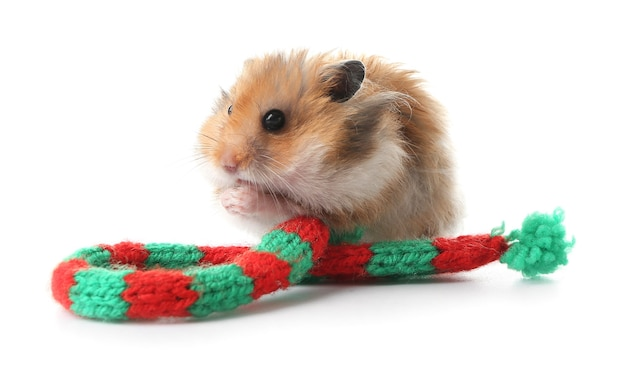 Funny hamster with knitted scarf on white