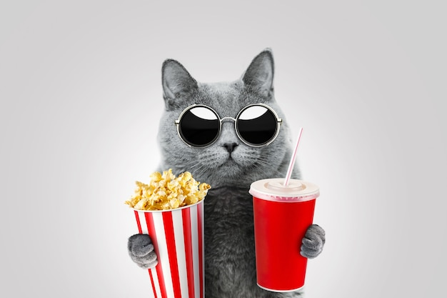 빈티지 선글라스를 쓴 재미있는 힙스터 고양이는 팝콘과 종이컵을 들고 있습니다. 고양이는 영화를 보고 간식을 먹습니다. 재미있는 컨셉 아이디어