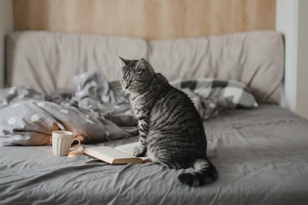 Забавный домашний кот в постели с книгой