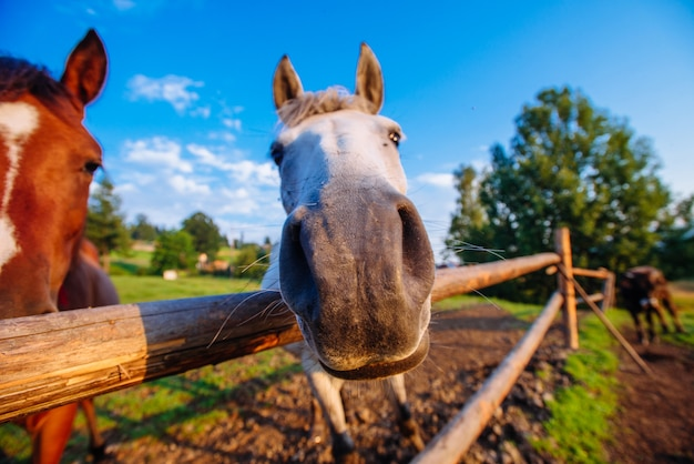 Funny horse close up