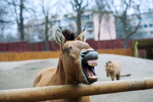 Funny horse in farm closeup