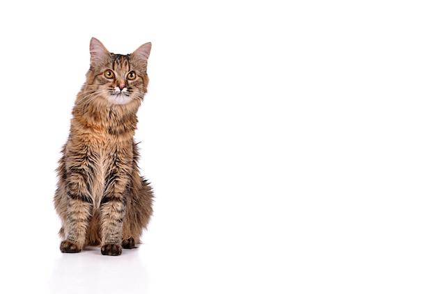 Забавный котенок кошка, изолированные на белом фоне