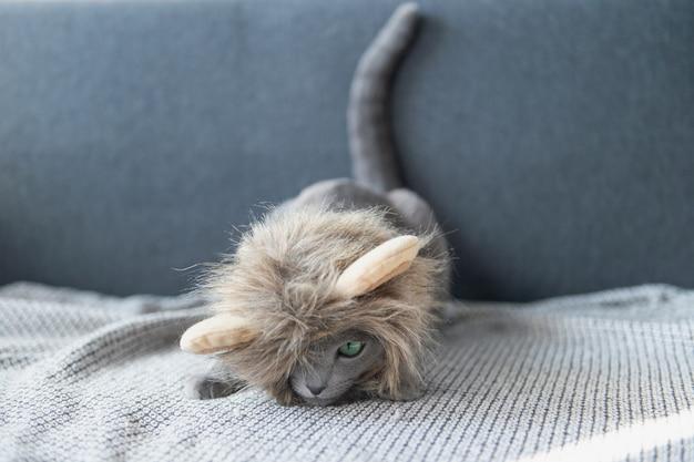 사자 마스크 침대에 누워 웃 긴 고양이