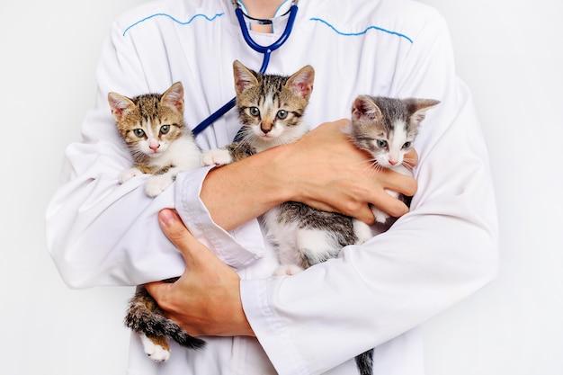 Забавные котята в руках ветеринара. котят держит ветеринар. котята проходят обследование в ветеринарной клинике. портрет животного котенка.
