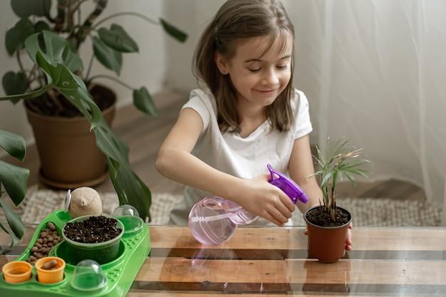 집에 있는 방에 식물이 있는 재미있는 어린 소녀 정원사는 물을 주고 실내 식물을 돌보고 꽃을 이식합니다.
