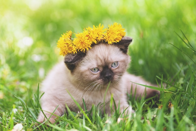 Funny little kitten with a yellow flowers crown sitting on the grass in the spring