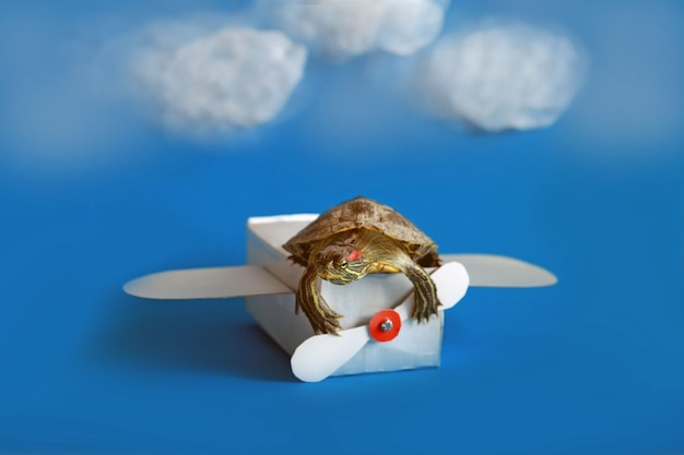 A funny little turtle flies on a paper plane on a blue background