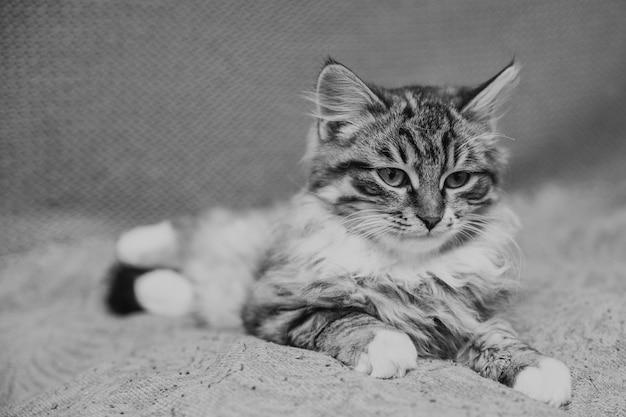 面白い小さな、長い髪の庭の子猫。