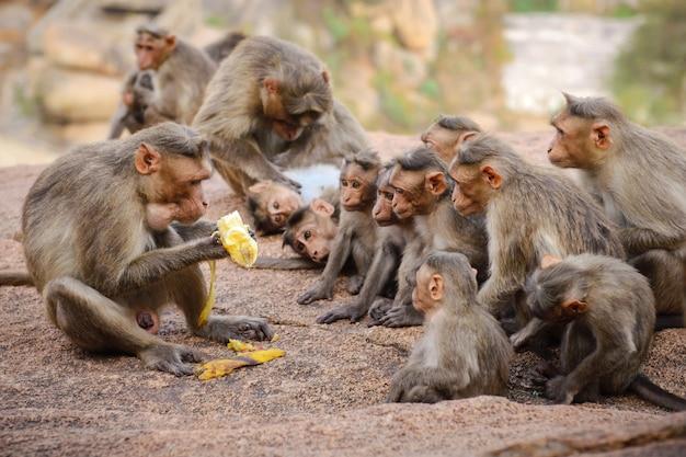面白い猿の家族