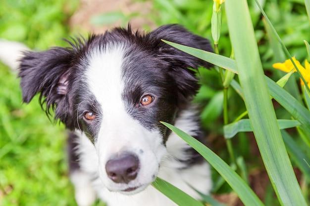Забавный открытый портрет милого улыбающегося щенка бордер-колли, сидящего в парке или саду