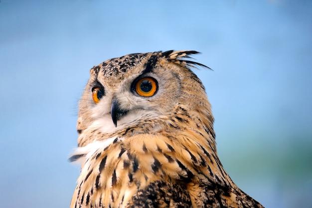 Смешное лицо совы крупным планом с большими глазами