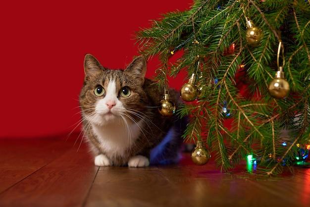 Забавный котенок выглядывает из-под ветки елки на красном фоне