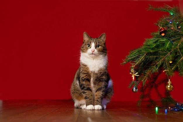 Забавный домашний кот, сидящий рядом с елкой на красном фоне, копией пространства