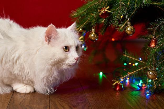 Забавный питомец белый кот смотрит под ветки елки на красном фоне