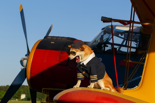 空港でパイロットスーツを着た秋田犬の面白い写真