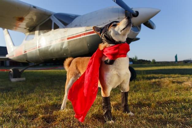 空港でパイロットスーツを着た柴犬の面白い写真