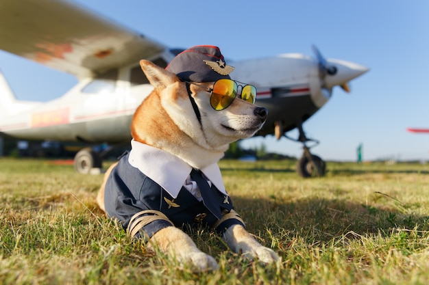 Funny photo of the shiba inu dog in a pilot suit at the airport