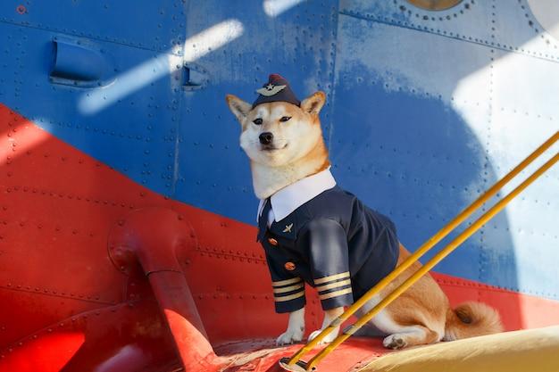 Funny photo of the shiba inu dog