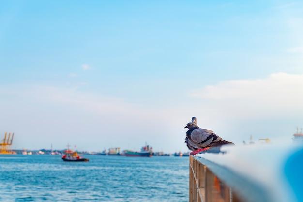 Забавный голубь, голубь с небом и рекой на заднем плане