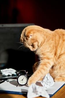 Забавный игривый кот играет с мятыми бумажными шариками на офисном столе в солнечном свете, на домашнем рабочем месте.