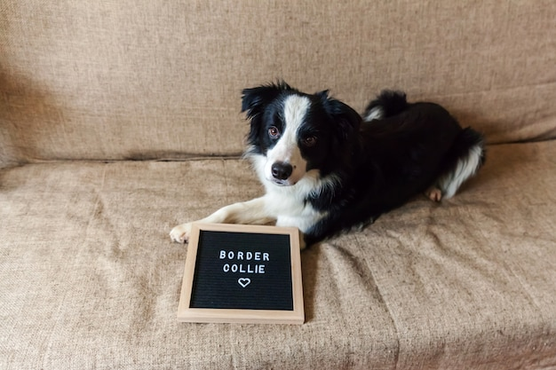 Funny portrait of cute on couch with letter board