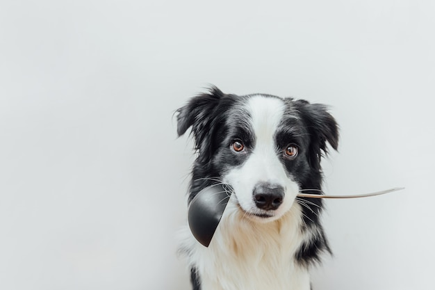 Funny portrait of cute puppy dog border collie holding kitchen spoon ladle in mouth isolated on white