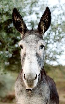Funny portrait of a grey donkey l