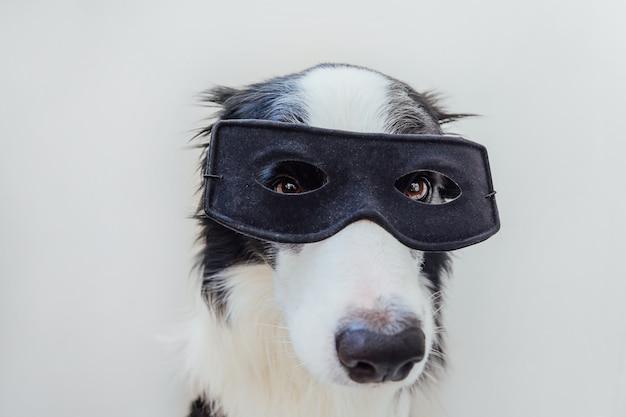 白い背景で隔離のスーパーヒーローの衣装でかわいい犬のボーダーコリーの面白い肖像画。カーニバルやハロウィーンで黒いスーパーヒーローマスクを身に着けている子犬。正義は概念を強化するのに役立ちます。
