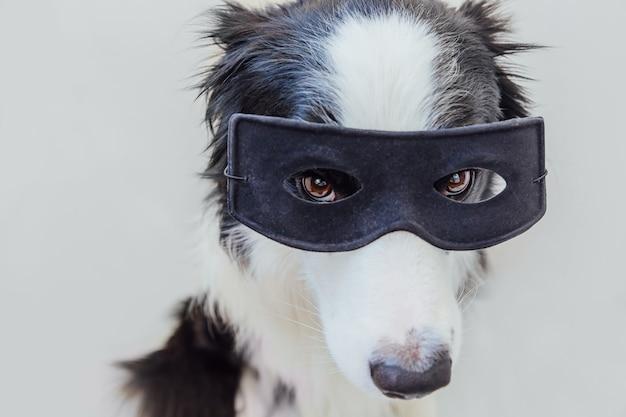 흰색 배경에 격리된 슈퍼히어로 의상을 입은 귀여운 강아지 보더의 재미있는 초상화. 카니발이나 할로윈에 검은 슈퍼 히어로 마스크를 쓴 강아지. 정의는 개념을 강화하는 데 도움이 됩니다.