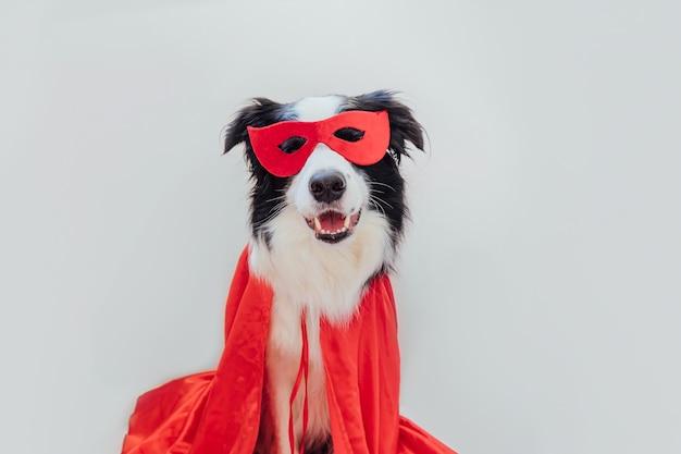 흰색 배경에 격리된 슈퍼히어로 의상을 입은 귀여운 강아지 보더의 재미있는 초상화. 카니발이나 할로윈에 빨간 슈퍼 히어로 마스크와 망토를 쓴 강아지. 정의 도움말 강화 개념