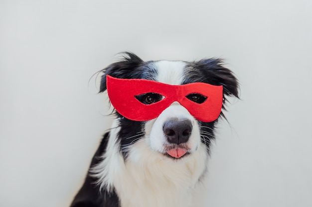 Смешной портрет милой собаки бордер-колли в костюме супергероя, изолированном на белом фоне. щенок в красной маске супергероя на карнавале или хэллоуин. правосудие помогает укрепить концепцию.