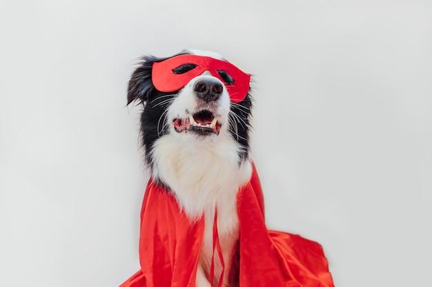 흰색 배경에 격리된 슈퍼히어로 의상을 입은 귀여운 강아지 보더의 재미있는 초상화. 카니발이나 할로윈에 빨간 슈퍼 히어로 마스크를 쓴 강아지. 정의는 개념을 강화하는 데 도움이 됩니다.