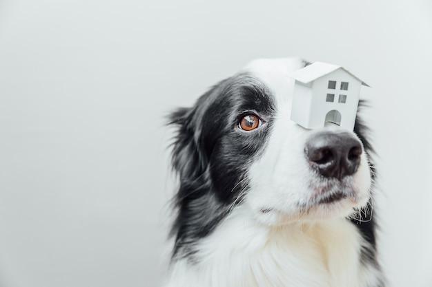 鼻にミニチュアのおもちゃのモデルの家を保持しているかわいい子犬の犬のボーダーコリーの面白い肖像画、白い背景で隔離