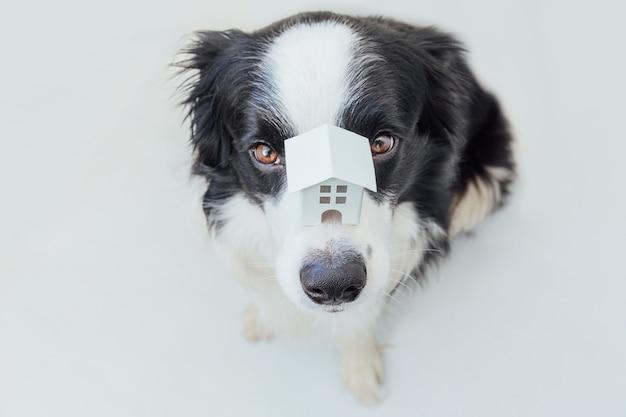 鼻にミニチュアのおもちゃのモデルの家を保持しているかわいい子犬の犬のボーダーコリーの面白い肖像画