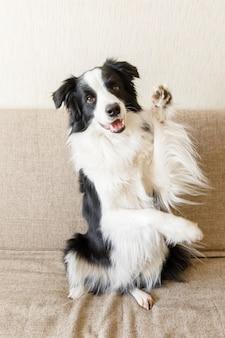 Забавный портрет милого щенка бордер-колли на диване