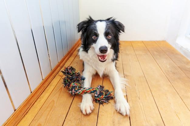 Смешной портрет милой улыбающейся щенки бордер-колли, держащей красочную игрушку из веревки во рту