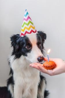 Смешной портрет милого улыбающегося щенка бордер-колли в глупой шляпе дня рождения, смотрящей на праздничный торт кекс с одной свечой, изолированной на белом фоне. концепция вечеринки с днем рождения.