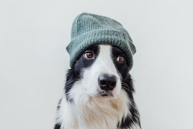 흰색 배경에 격리된 따뜻한 니트 모자를 쓰고 웃고 있는 귀여운 강아지 보더 콜리의 재미있는 초상화. 가족 작은 강아지의 새로운 사랑스러운 구성원의 겨울 또는 가을 초상화.