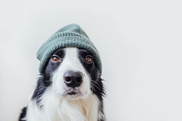 Забавный портрет милого улыбающегося щенка бордер-колли в теплой вязаной шапке, изолированной на ...