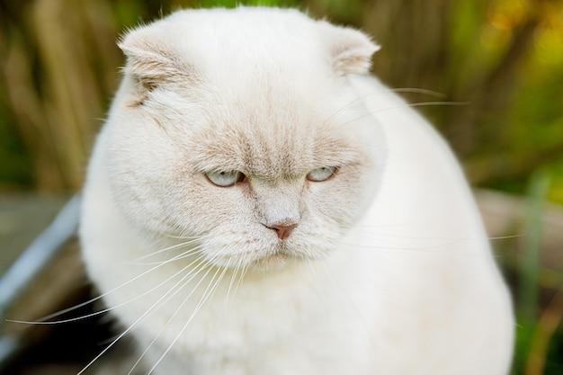 Забавный портрет короткошерстного домашнего белого котенка на зеленом дворе