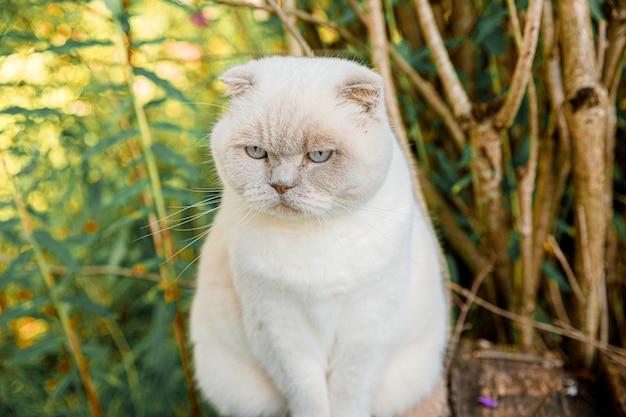Забавный портрет короткошерстного домашнего белого котенка